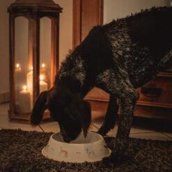 woofdog-napf