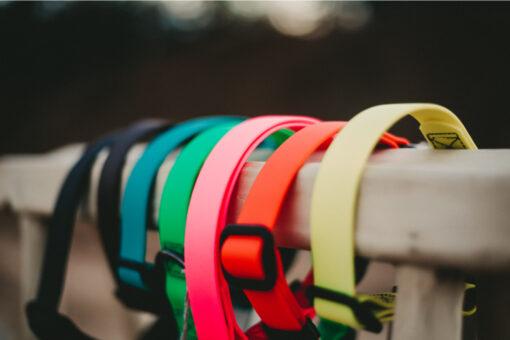 Hundehalsband-STAY_2